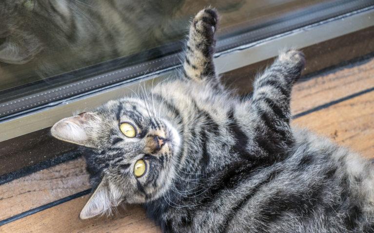Cats in Cappadocia :: I've Been Bit! A Travel Blog