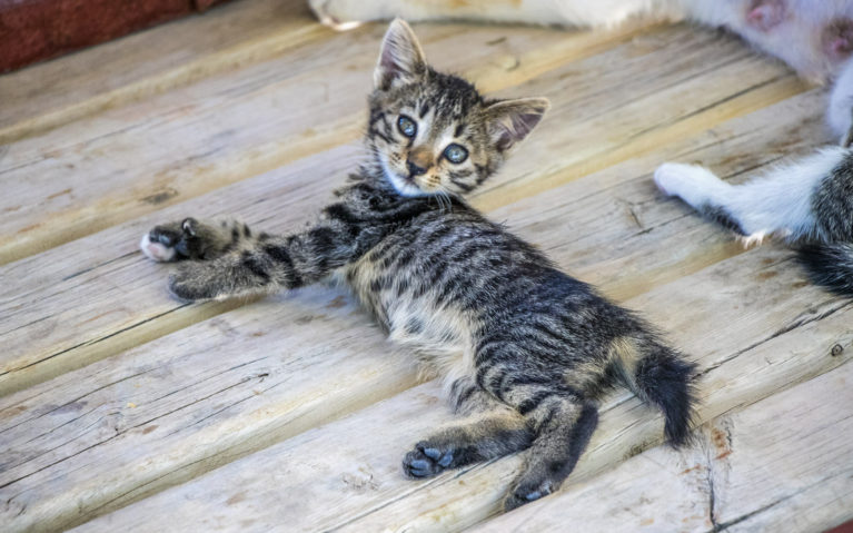 Turkish Kittens :: I've Been Bit! A Travel Blog