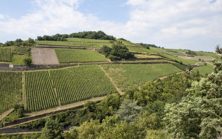 Assmanshausen Vineyards :: I've Been Bit! A Travel Blog