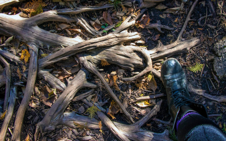 Watch Your Step! Belfountain Conservation Park :: I've Been Bit! A Travel Blog