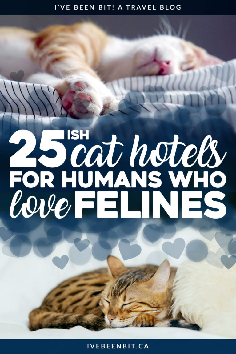 If you're a cat lover who misses their furry feline while on the go, these hotels with cats will be sure to give you the kitty snuggles you need to survive! Pet-friendly accommodation around the world. Hotels for cat lovers who travel. Hotels for animal lovers who explore. | #Travel #Accommodation #PetFriendly #CatLover #HotelsWithCats | IveBeenBit.ca