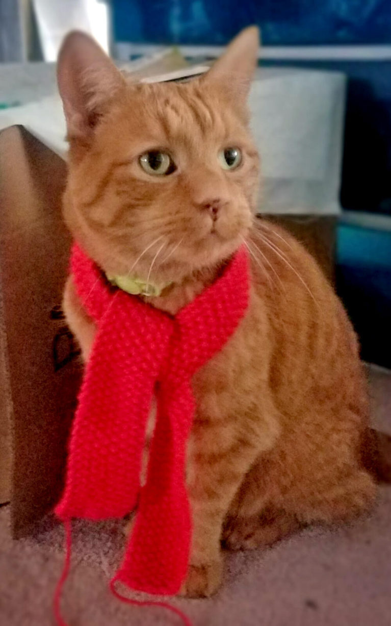 Riley My Parent's Cat Decked Out for Christmas :: I've Been Bit! A Travel Blog