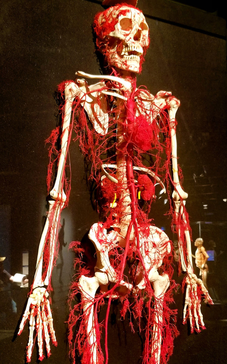 Body Worlds RX at Sudbury, Ontario's Science North :: I've Been Bit! Travel Blog