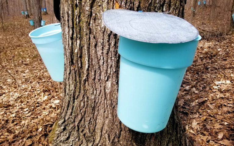 Tapped Trees at the Elmira Maple Syrup Festival :: I've Been Bit! Travel Blog