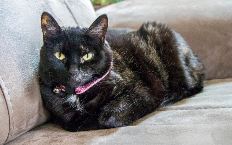 Louise, the Resident Cat of the Sugar Maple Trailside Inn :: I've Been Bit! Travel Blog
