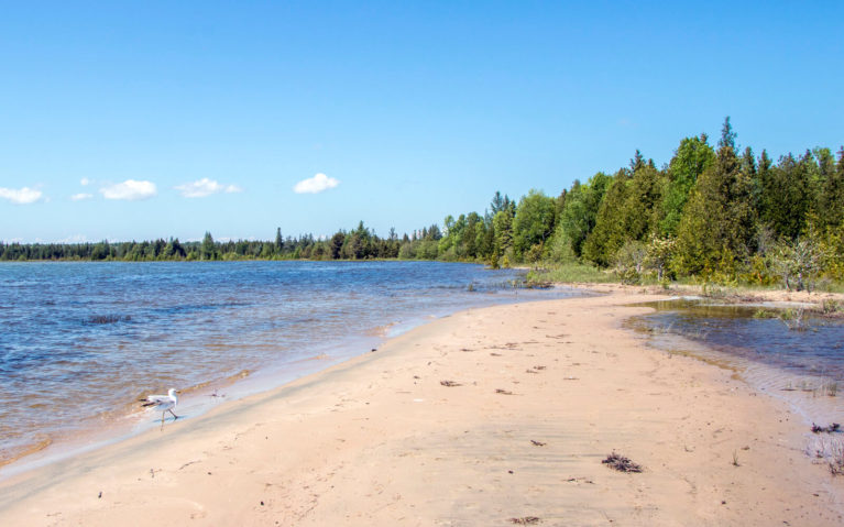 Beach View Along a Trail in Misery Bay Provincial Park :: I've Been Bit! Travel Blog
