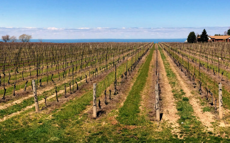Views of the Vineyards at Konzelmann Estate Winery And Lake Ontario :: I've Been Bit! Travel Blog