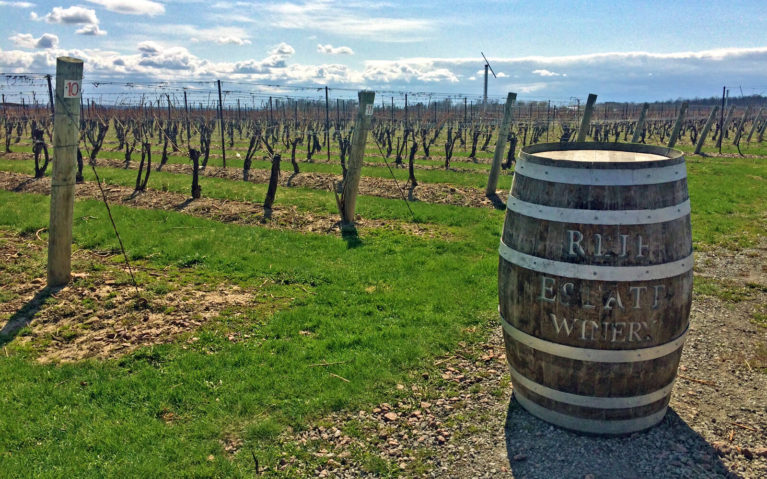 Wine Barrel In Front of Vines at Reif Estate Winery in Niagara-on-the-Lake :: I've Been Bit! Travel Blog