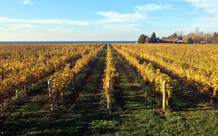 Views of the Vineyards On Lake Ontario in Niagara-on-the-Lake :: I've Been Bit! Travel Blog