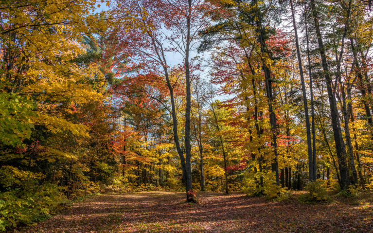 Forest of Golds and Reds, a Sure Sign of Fall in Ontario :: I've Been Bit! Travel Blog