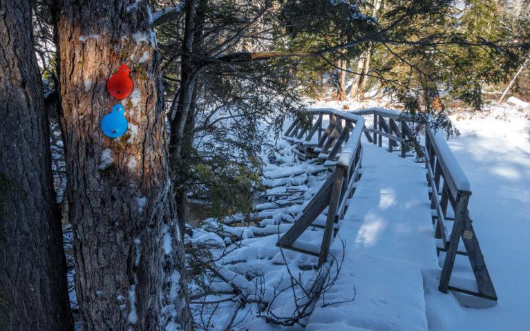 Tree with Blazes and Snowy Bridge Crossing Creek :: I've Been Bit! Travel Blog