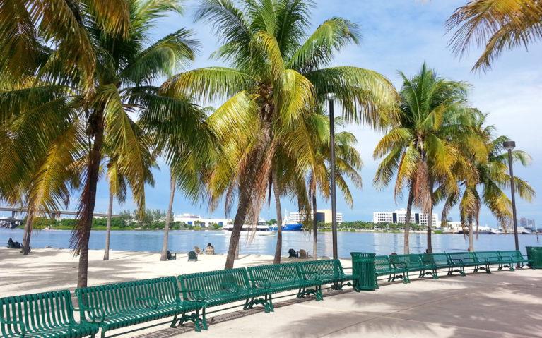 Palm Trees along Bayfront Park in Miami :: I've Been Bit! Travel Blog