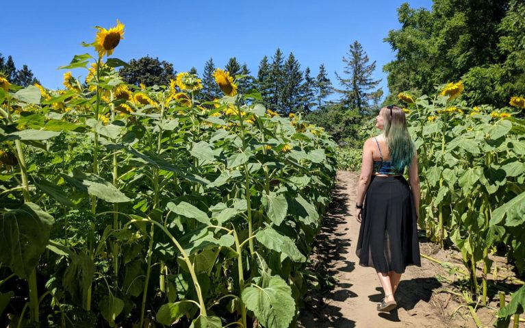 Lindsay in an Ontario Sunflower Field :: I've Been Bit! Travel Blog