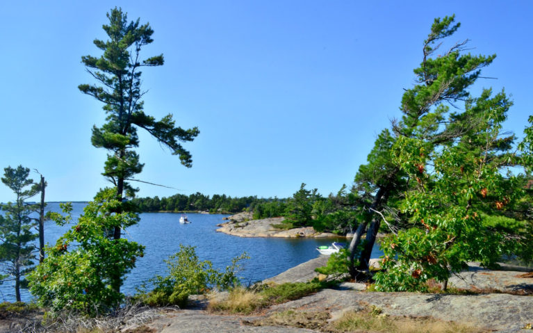 Ontario Road Trip Views Like These Windswept Pines in Muskoka Make it an Iconic Destination :: I've Been Bit! Travel Blog