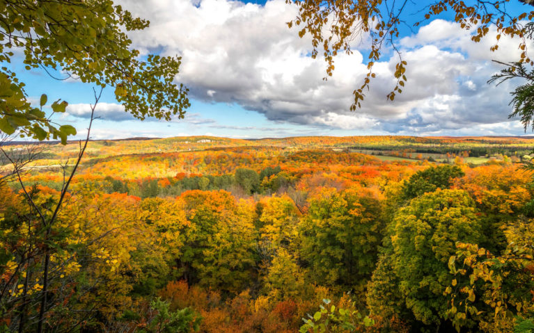 Fall Colours from the Main Bruce Trail in Duncan Escarpment Provincial Park :: I've Been Bit! Travel Blog