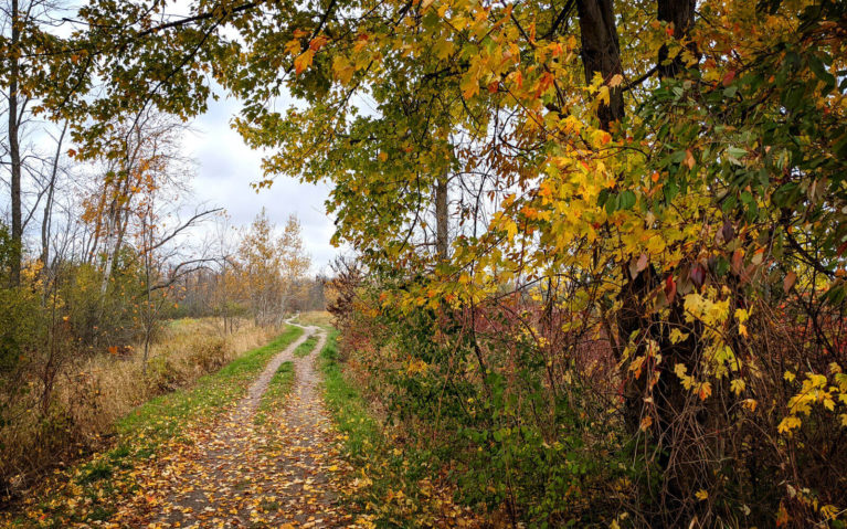 Views Along the Dofasco 2000 Rail Trail :: I've Been Bit! Travel Blog