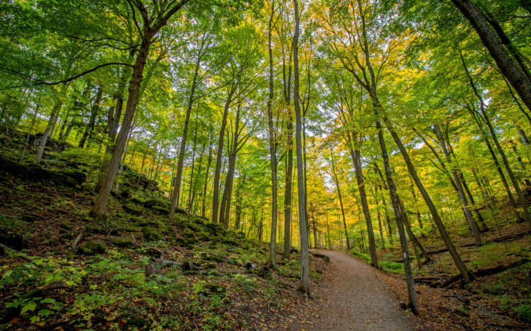 Views from the Trails in the Dundas Valley Conservation Area :: I've Been Bit! Travel Blog