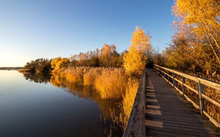 Autumn Golden Hour Views at Mel Swart Lake Gibson Conservation Park :: I've Been Bit! Travel Blog
