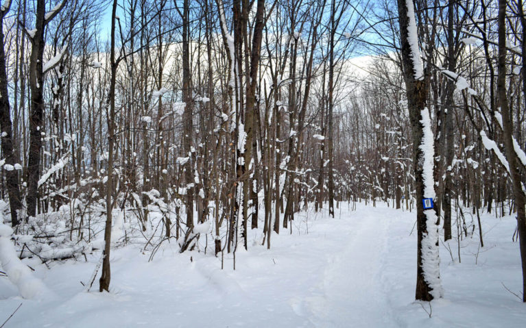 One of the Trails at Scenic Caves Nature Adventures in Winter :: I've Been Bit! Travel Blog