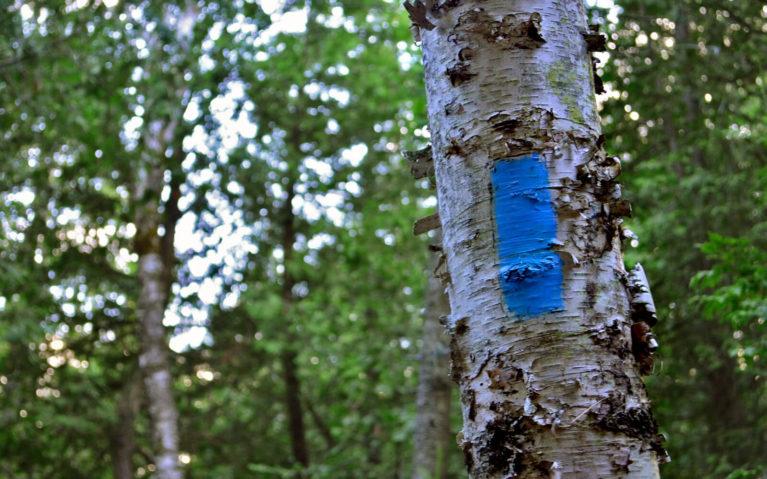 Bruce Side Trail Blue Blaze :: I've Been Bit! Travel Blog