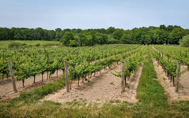 Rows of Vineyards in Niagara-on-the-Lake :: I've Been Bit! Travel Blog