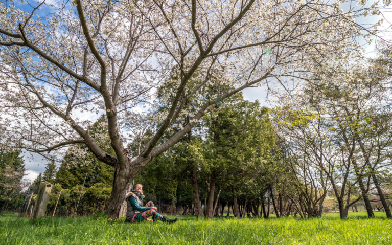 Lindsay Sitting Under a Cherry Tree in Bloom :: I've Been Bit! Travel Blog