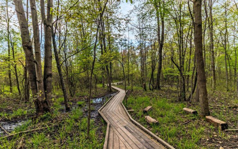 Boardwalk Trail Through the Heartland Forest :: I've Been Bit! Travel Blog