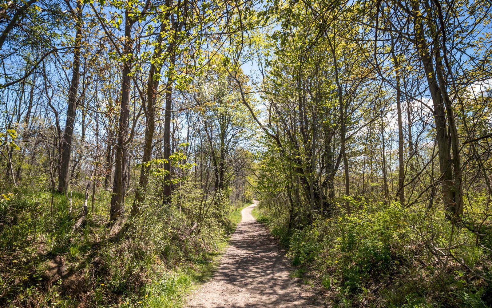 Hiking Trails at Short Hills Provincial Park :: I've Been Bit! Travel Blog