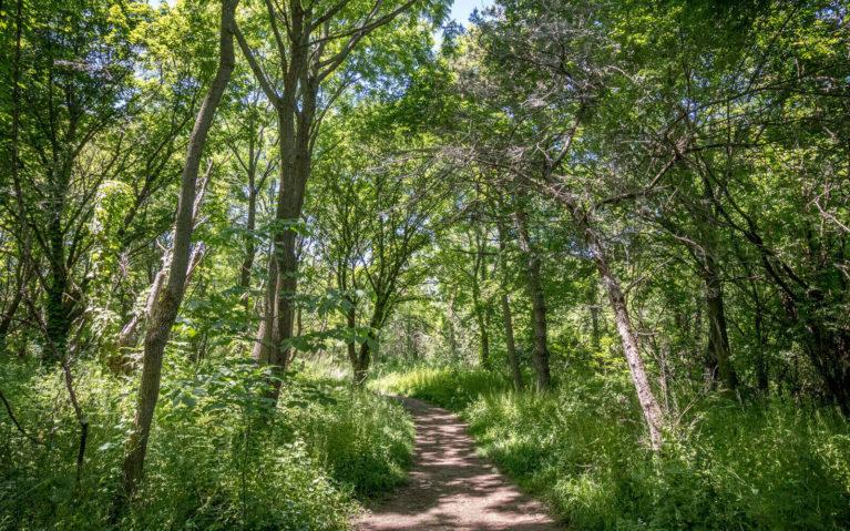 Bruce Trail Niagara Falls Hiking Trails :: I've Been Bit! Travel Blog